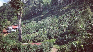 Coffee at the Source: Deep in Nicaragua's Rainforests