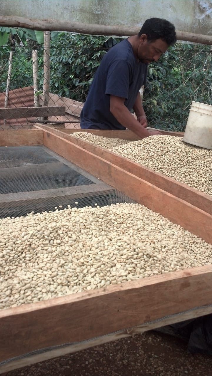 Nicaragua Gold Mountain 'Fighting Poverty' Microlot