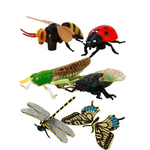 6-pcs Insect Collection Models