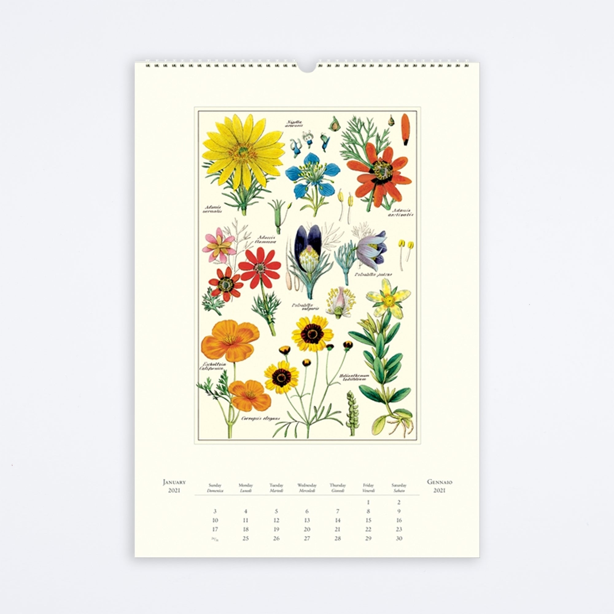 Vintage Wildflowers Wall Calendar