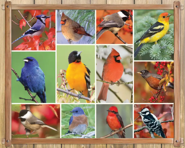 1000 piece Songbirds