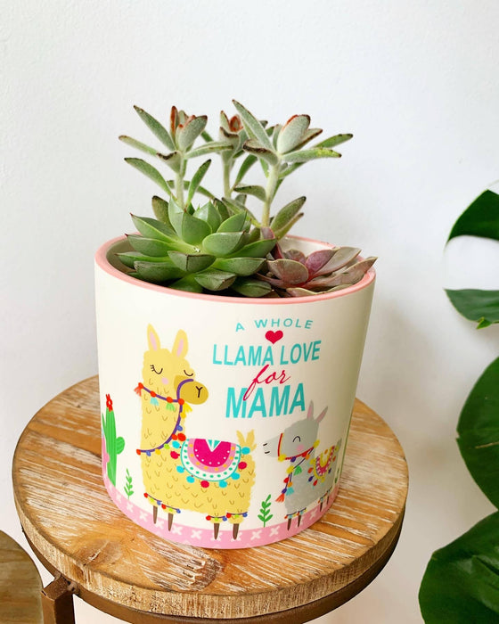 "Succulent Arrangement in ""Llama Love for Mama"""
