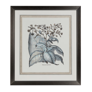 Steel Blue Botanical Lithograph 3