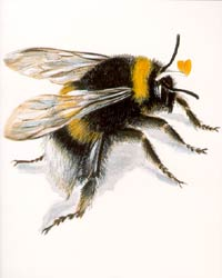 Archivist - Bumble Bee