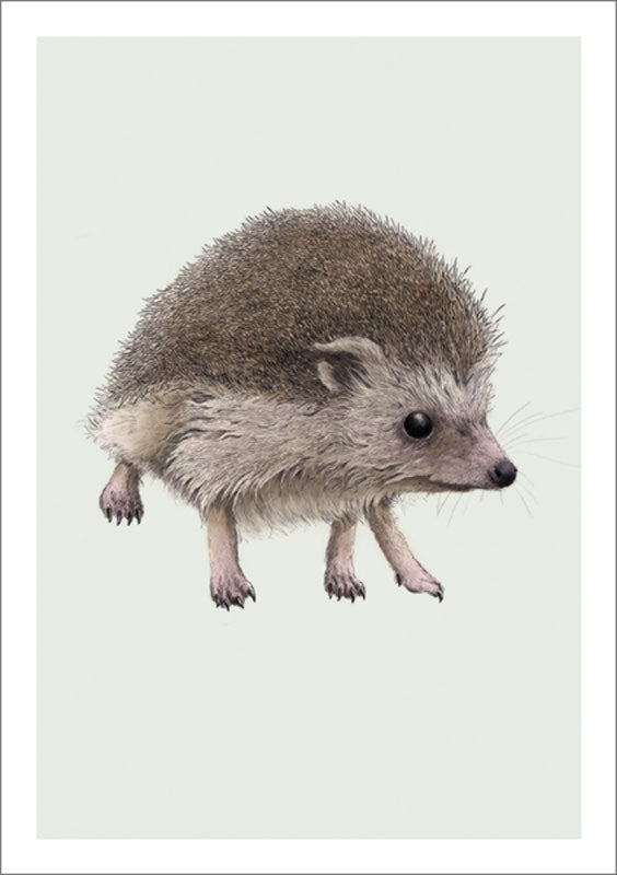 The Art File - Hedgehog