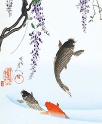 Museums and Galleries - Carp Jumping