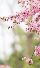Laden Sie das Bild in den Galerie-Viewer, PrivateWall<br>Cherryblossoms I