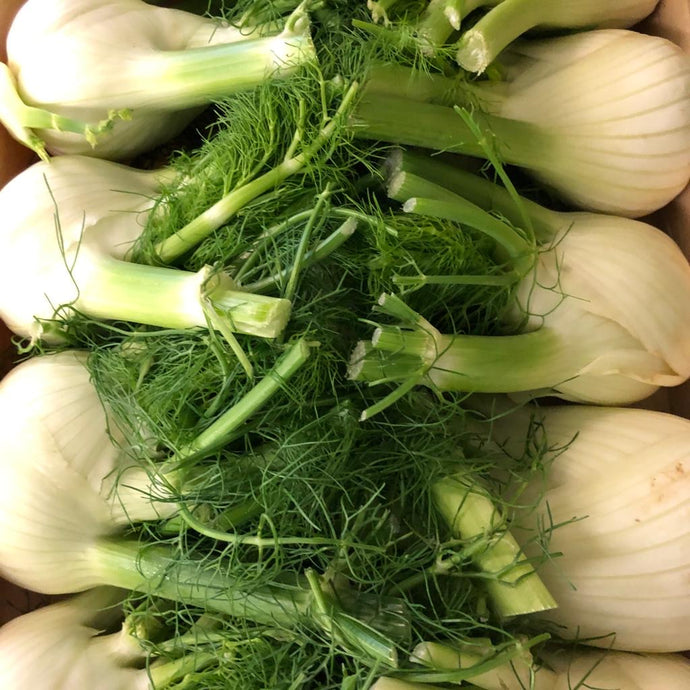 Fennel (head)