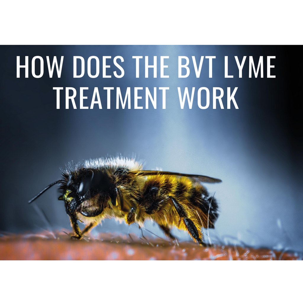 How does the BVT Lyme Treatment work?
