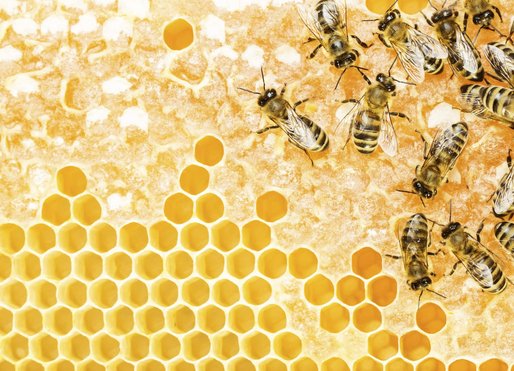 Propolis and the incessant work of bees
