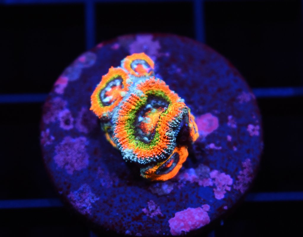 ECC Rainbow Road Micro