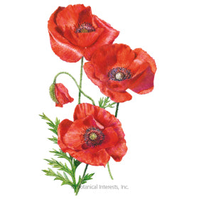 SEEDS: Poppy American Legion
