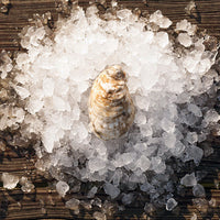 Rappahannock River Oyster, 25 oysters per bag