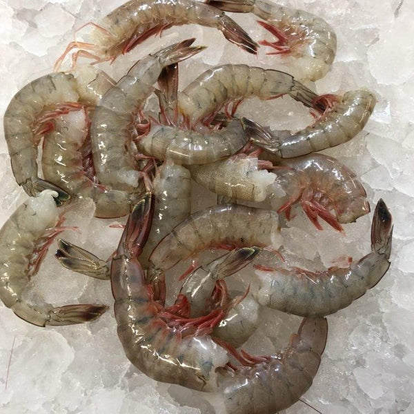 Wild Gulf of Mexico Raw White Shrimp U15 count, shell-on, head-off (5lb block, frozen)
