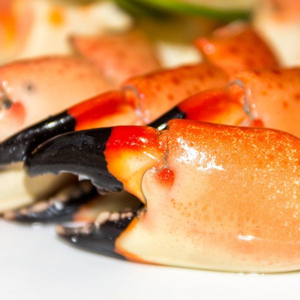 Fresh Florida Medium Stone Crab Claws (2.5lb case, fresh)