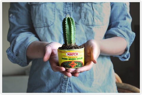Cactus in a Tin