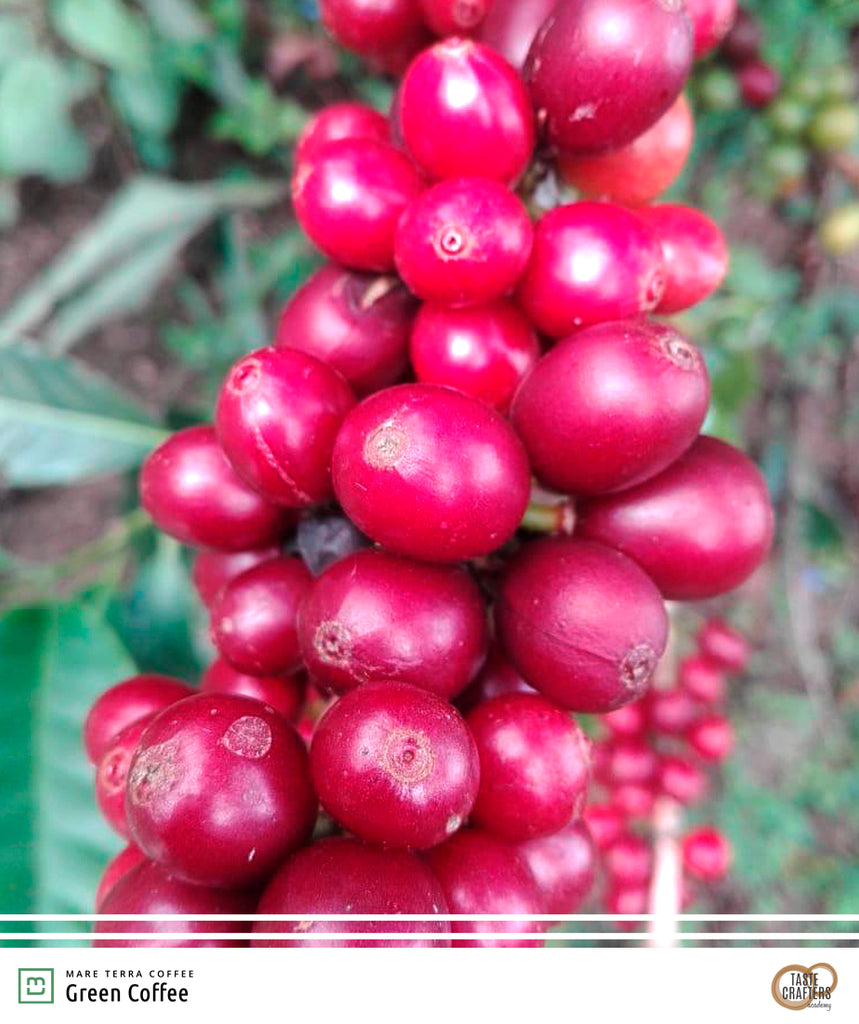 COLOMBIA GOLDEN HUILA 1kg - Dropshot Coffee