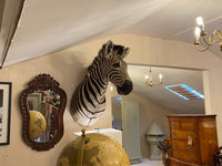Taxidermy of a zebra head