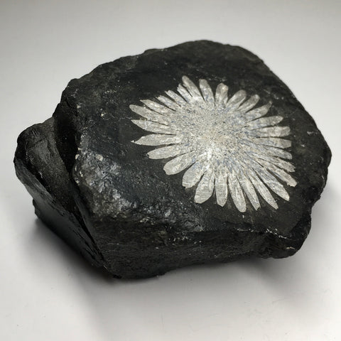Chrysanthemum Stone