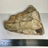 Upper Tibia Dinosaur Bone with Chalcedony