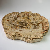 Petrified Wood - Indonesia