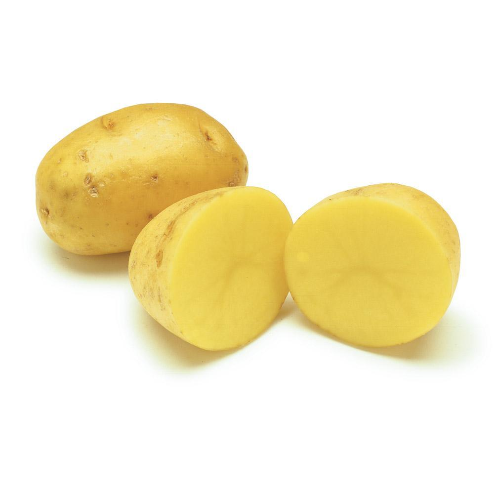 YUKON POTATO