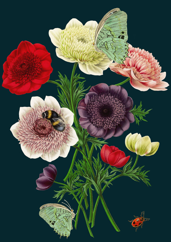 'Anemones' Greetings Card