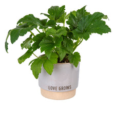Load image into Gallery viewer, Love Grows Pot