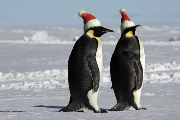 Travel: Christmas in Antarctica Will Make for an Experience You're Not Soon to Forget | Schmidt Christmas Market