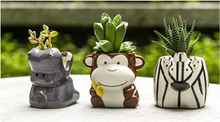 Load image into Gallery viewer, Plant Buddies- Jungle Safari Set of 6