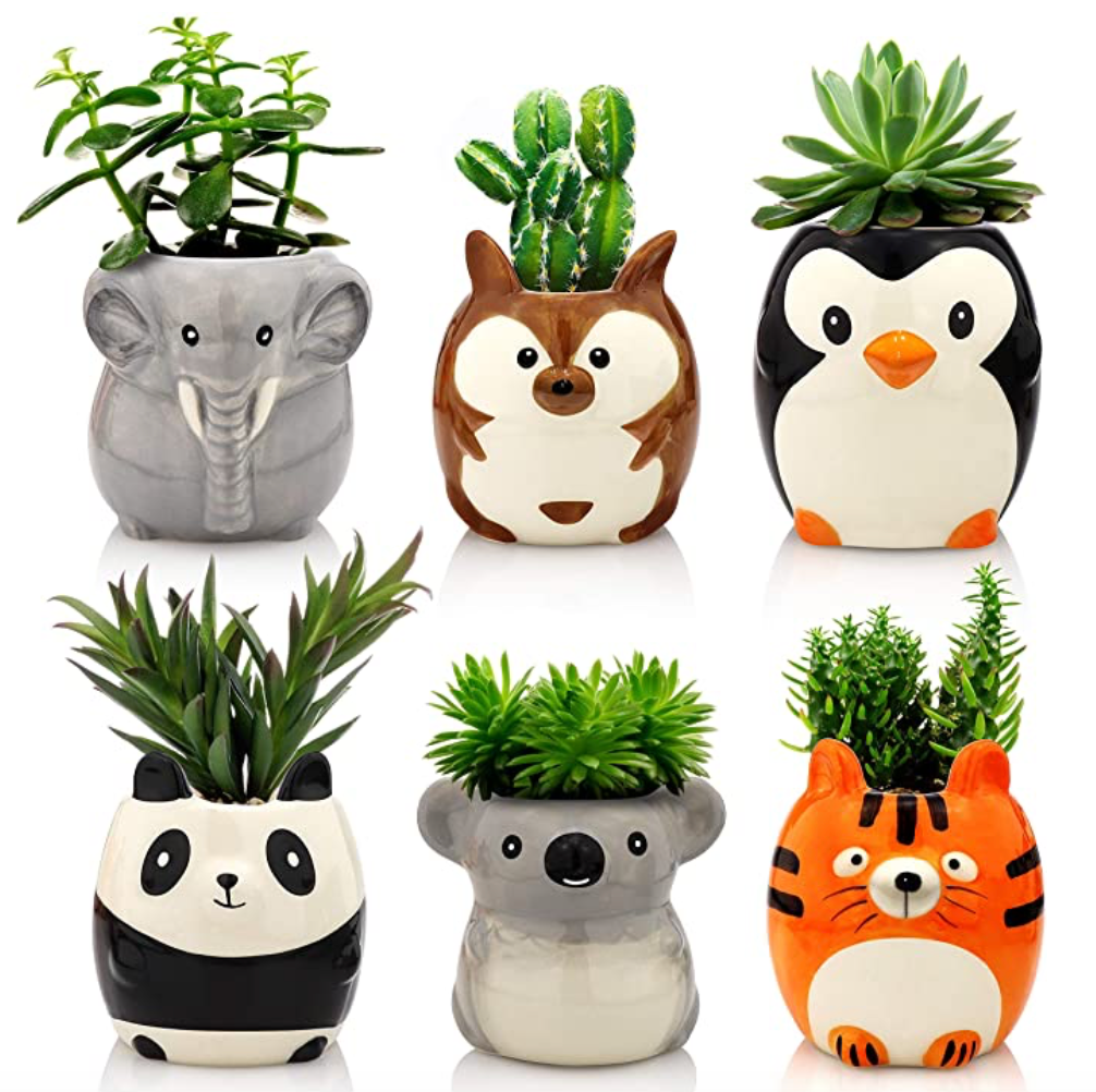 Plant Buddies - Wild Safari Animals Pack of 6
