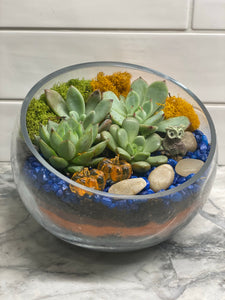 Glass Slope Bowl Succulent DIY Kit