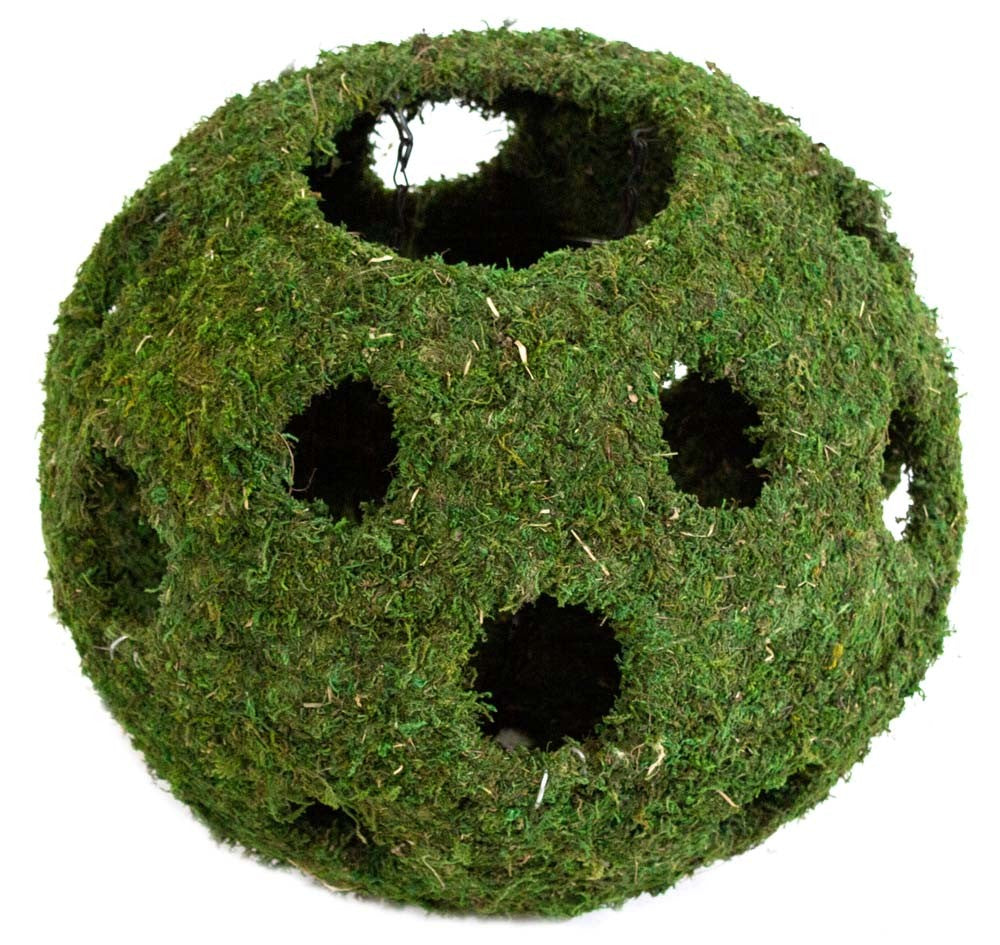 Galapagos Mossy Cave w/ Holes Green 12in Diameter