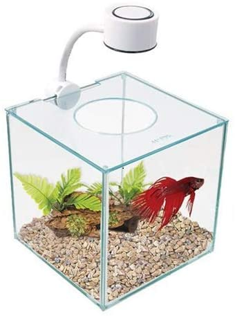 MarinaCUBUS Glass Betta Kit