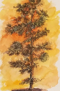 Cedar At Sunset Pen with Watercolor Painting by Nancy Maxwell