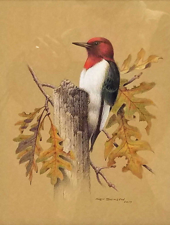 Red Headed Woodpecker Colored Pencil Painting by Ken Bucklew
