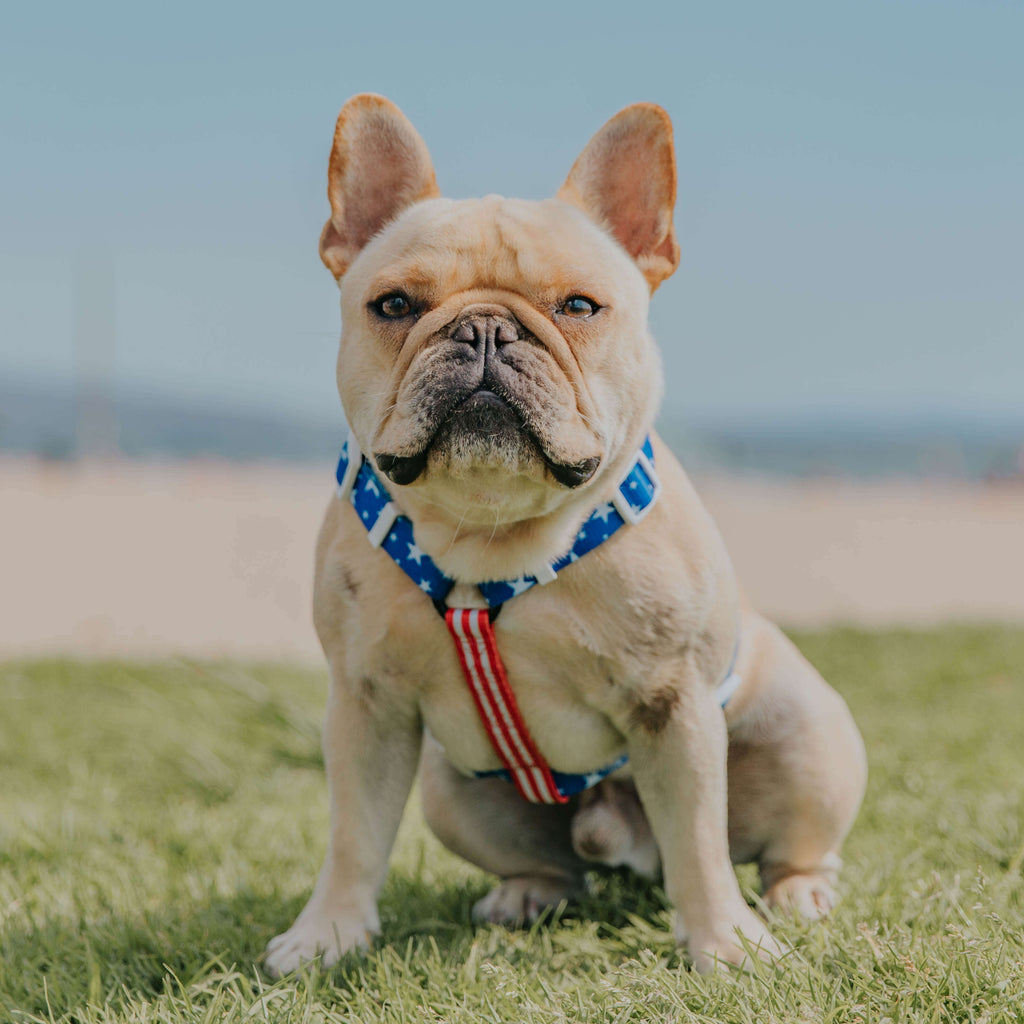 Red, White & Bark Free-Fit Harness