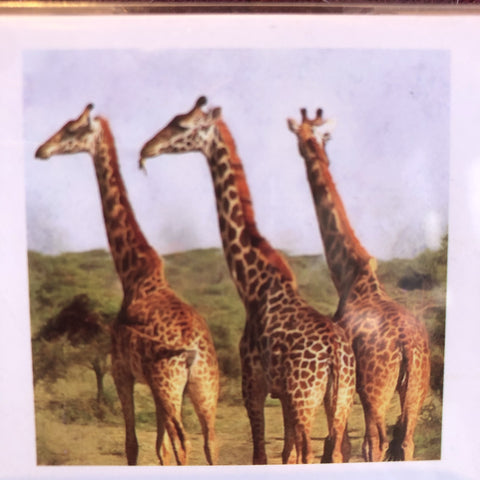 Giraffes Animals Africa Diamond Painting Art Kit Set 30 x 30 Full Drill Round 5D - JohnnyBoyAus