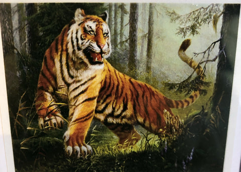TP25 Tiger Diamond Art Kit Set Large 40 x 50cm Painting - JohnnyBoyAus