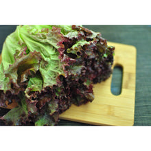 Load image into Gallery viewer, Redleaf Lettuce-Per Head