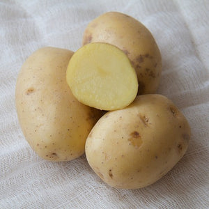 Potato Yukon- Medium Sized- 5lbs