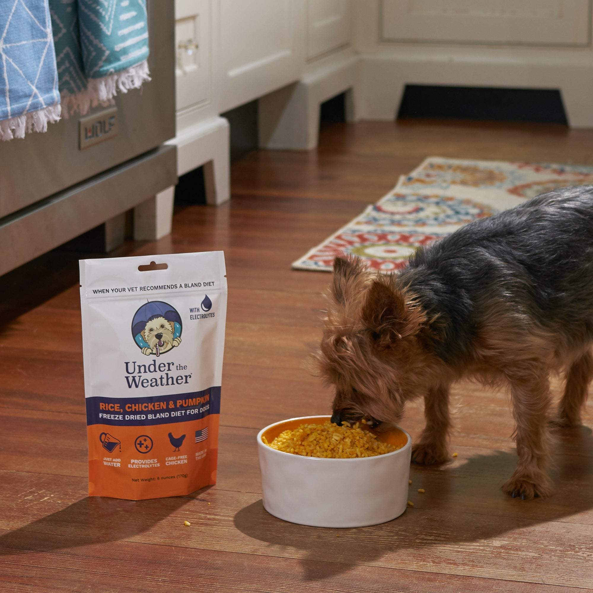 Pumpkin Patch Pack - Bland Diet For Dogs