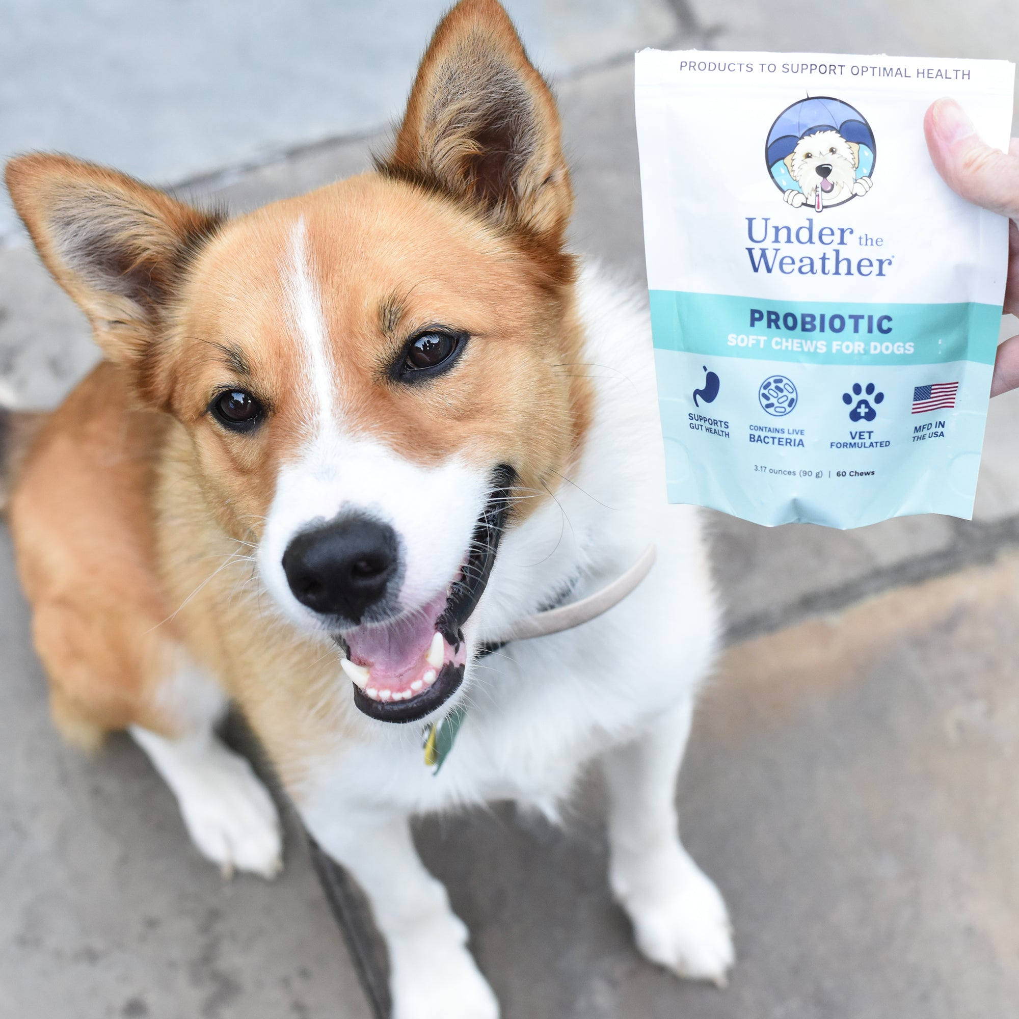 Probiotic Soft Chews & Anti-Diarrhea For Dogs