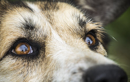 blog-focus-in-on-your-dog-s-eye-health.jpg