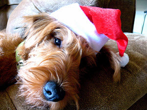 blog-keeping-your-dog-calm-during-the-holidays.jpg