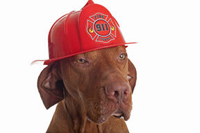 blog-pet-fire-safety-day.jpg