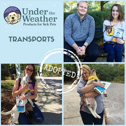 blog-saving-more-dogs-with-transport-programs.png