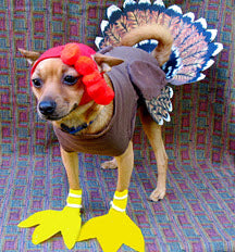 blog-thanksgiving-meals-for-dogs.jpg
