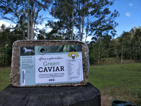 GREEN CAVIAR HORSE BRICKS 2KG