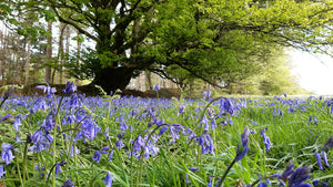 5 of the best places to see bluebells near Exeter